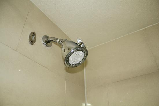 Comfort Inn &amp; Suites Zoo / SeaWorld Area: Shower Head (Hey, that&#39;s important to some people.)