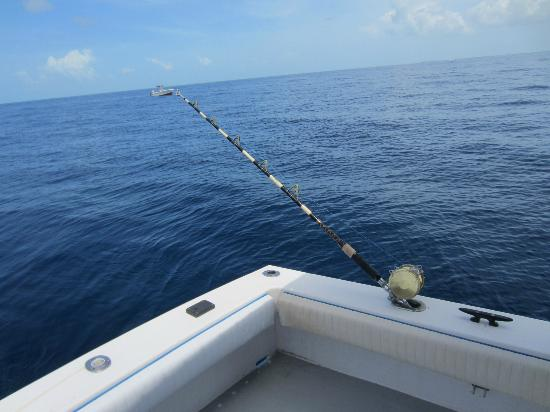 Key West Fishing Connection: The Rod