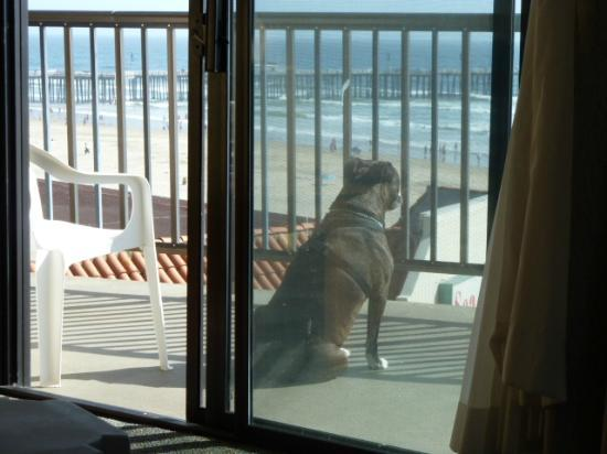 Edgewater Inn &amp; Suites: my dog loves it here