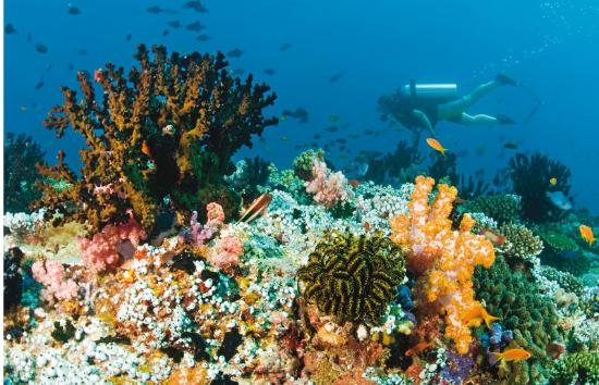 Baros Maldives: Diving on the house reef