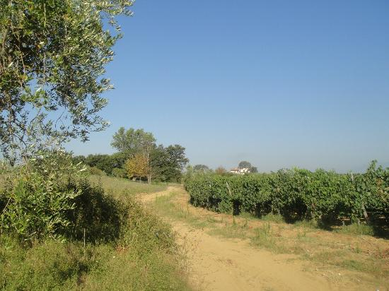 Podere Cantagrillo: Nice walking around the hotel!