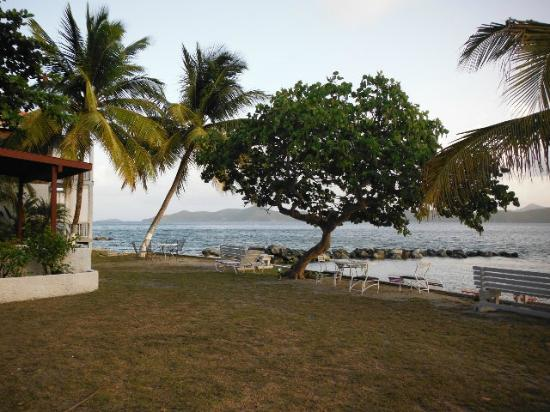 Fort Recovery Beachfront Villa & Suites Hotel: perfect tree to read a book under
