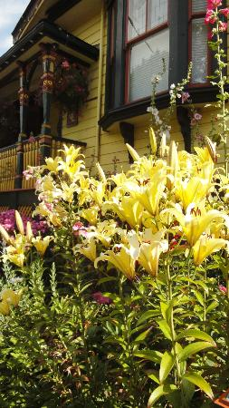 Albion Manor Bed and Breakfast: Lovely Lilies