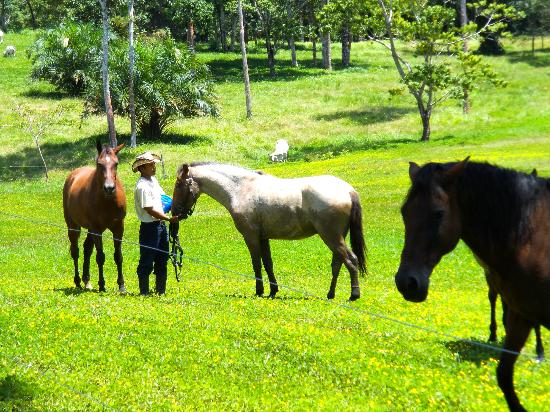 Sirmoor Hill Farm Bed and Breakfast: The Horse Whisperer of Sirmoor Farms