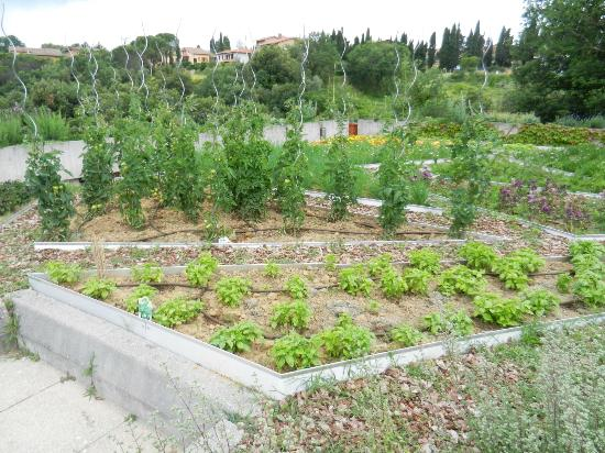 Hotel Terre di Casole: The hotels herbal and vegetables garden on the terrace
