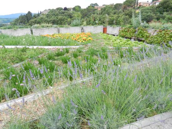 Hotel Terre di Casole: Garden on the terrace
