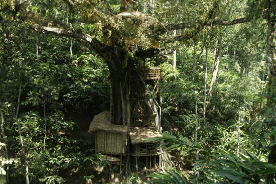 Shola Periyar Tree House