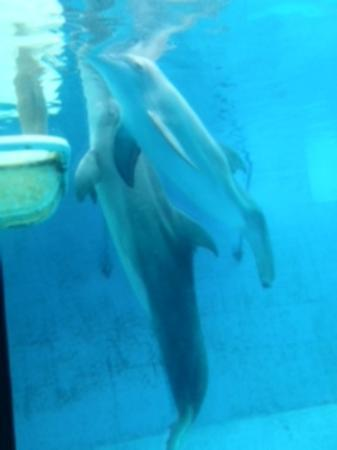 Winter Has Hope Picture Of Clearwater Marine Aquarium