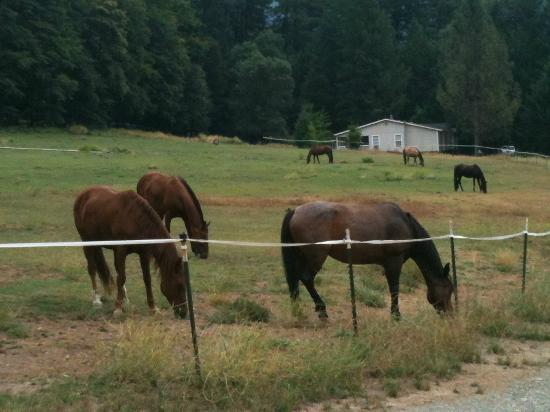 Marble Mountain Ranch - Family Guest Ranch: The Horses during down time!
