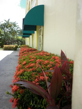 Bay Gardens Inn: Beautiful floral hedge just outside the lobby front!