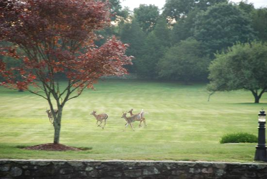 Point Pleasant Inn: White Tailed Deer on the front lawn