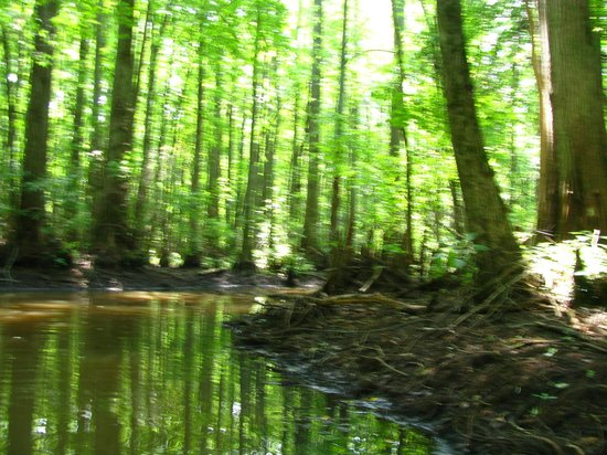 Deep In The Water Trail Picture Of Trap Pond State Park