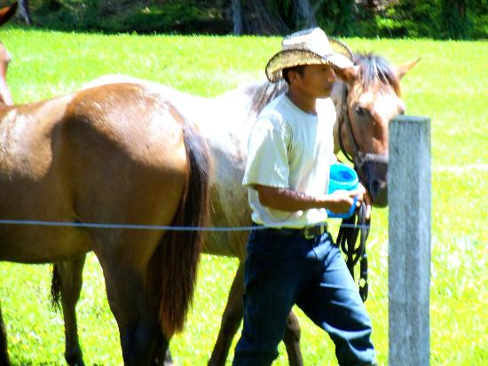 Sirmoor Hill Farm Bed and Breakfast: Raul, the Horse Caretaker