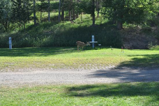 Pine Near RV Park & Campground: AM greeting from a local guest!
