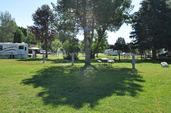 Pine Near RV Park & Campground: The park and other sites