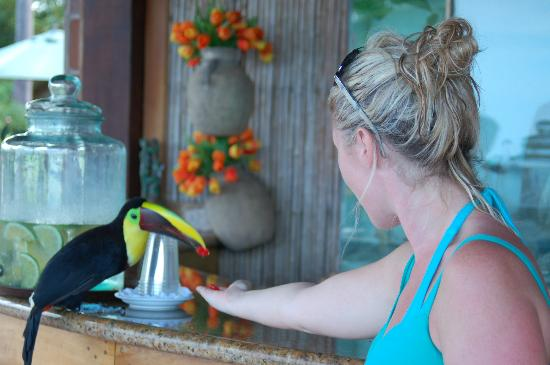 Hacienda del Mar: Feeding a wild toucan!