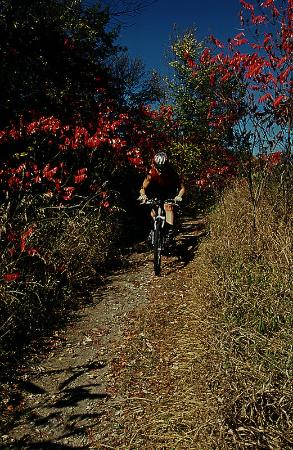 Comfort Inn: Bike Trail Fall Colours
