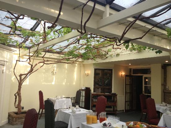Grapevine Hotel: The vine in the splendid restaurant.