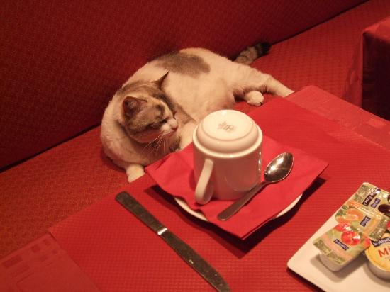 Hotel Choiseul Opera: breakfast with hotel's cat
