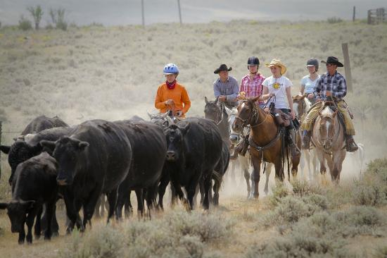 Hanna, WY: Cattle Drive