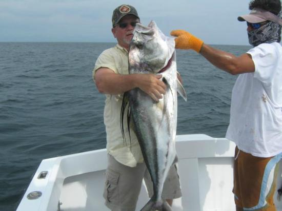 Costa Rica Sport Fishing on the Predator: Large Rooster