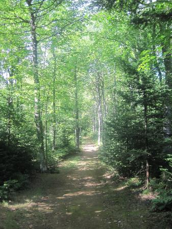New Glasgow, Canada: Forest walk on the property