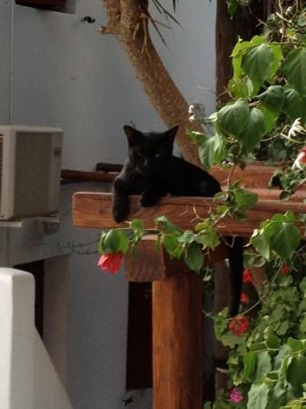 Villa Pinelopi Apartments & Rooms: the cat
