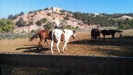 Bishop's Lodge Resort & Spa: lovely horses