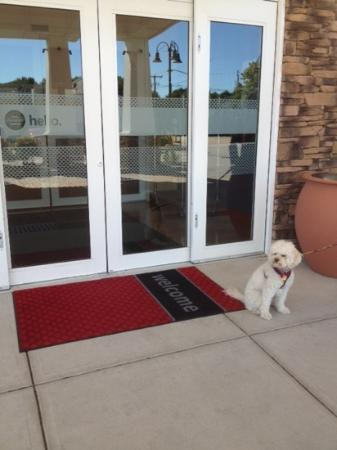 Hampton Inn & Suites Mystic: At the front door!