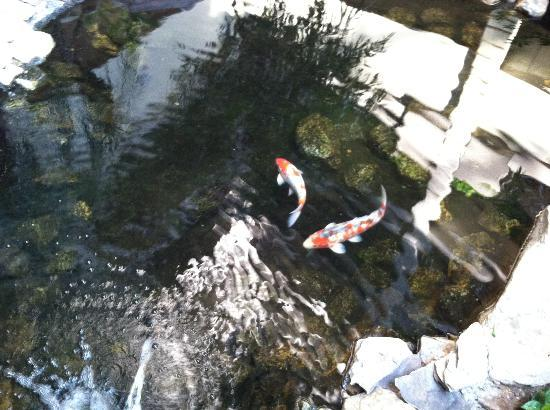 Embassy Suites Baltimore - North /  Hunt Valley: Koi Fish