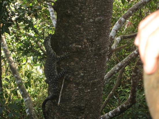 Secrets on the Lake: What a magnificent healthy specimen. We also saw Kookaburras and possums!