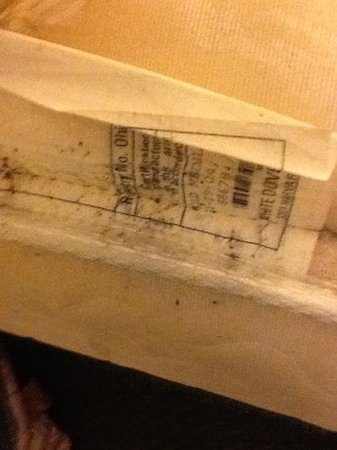 Super 8 Portsmouth:                   visible bed bug feces under the sheets at the foot of the bed.  This is the ma