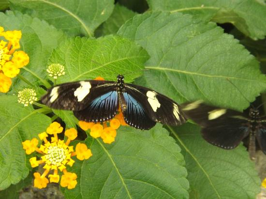 Lewis Ginter Botanical Garden: Different shapes and species