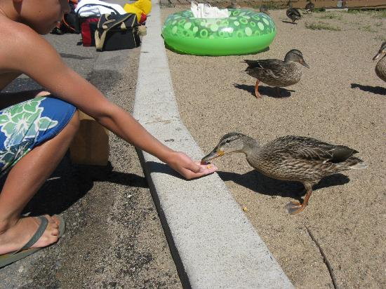 Cragun's Golf Resort and Conference Center: Feeding the ducks