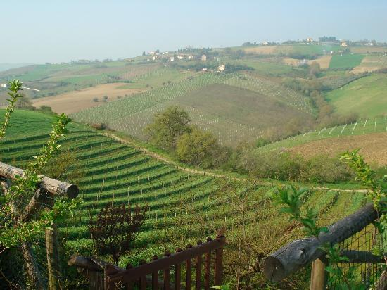 Agriturismo Fiorano: Another view of the Fiorano Vineyard