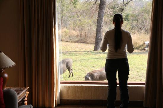 Sabi Sabi Bush Lodge: Pumbas came to visit