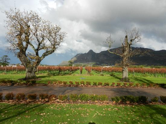 Steenberg Hotel: Steenberg vineyards