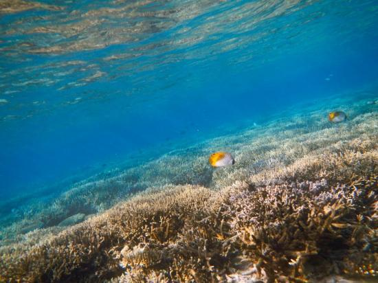 Matamanoa Island, Fiji: The reef at your doorstep. Do yourself a favour & buy a Duty Free underwater camera at the airpo