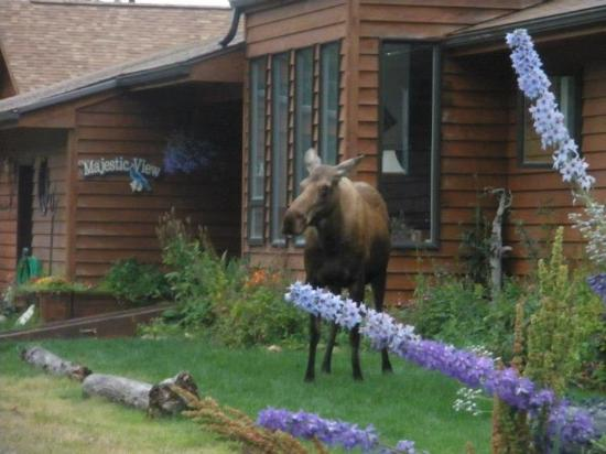 Maria's Majestic View Bed & Breakfast: One afternoon we had a visitor at the front door.