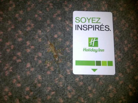 Holiday Inn Select Montreal Centre-Ville: Bug that I had to kill in my room. And was not cleaned up by staff when asked.