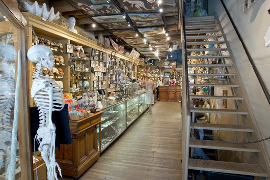 The evolution store new york city ny hours address for Home decor stores nyc