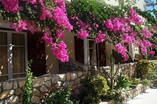 Beautiful Flowers Everywhere - Picture Of Polydefkis Apartments  Kamari
