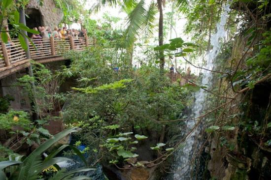 Tropical Forest Setting Picture Of Dallas World Aquarium