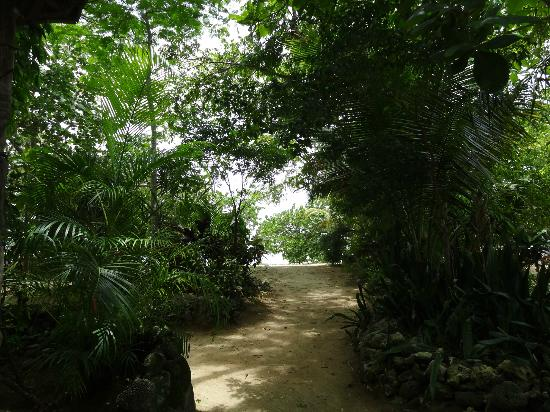Half Moon Beach: pathways leading to the beach