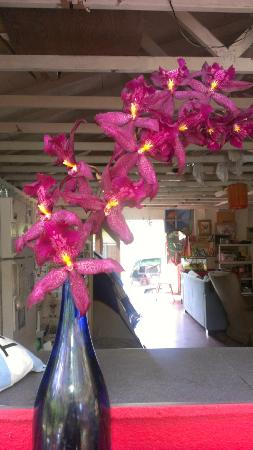 Hedonisia Hawaii Sustainable Community: Purple Orchids in the barn of Hedonisia...I stayed in the tent right behind the flowers ;)