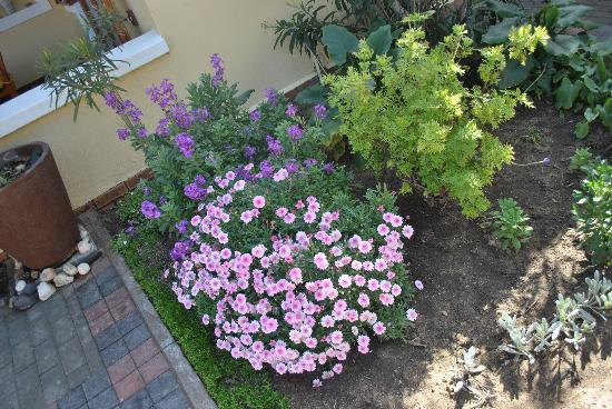 Cornerstone Guesthouse: Beautiful gardens