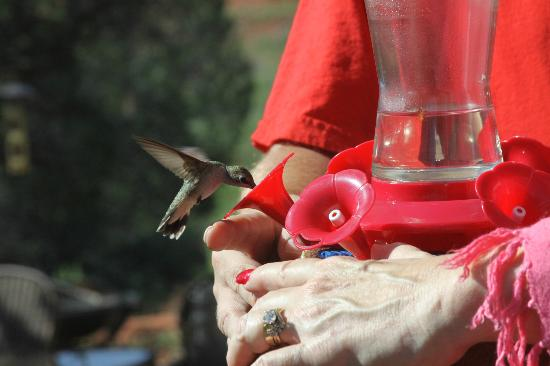 Sedona Cathedral Hideaway: Getting as close to a Hummingbird as possible