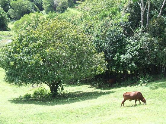 Maleny Tropical Retreat: View from our deck