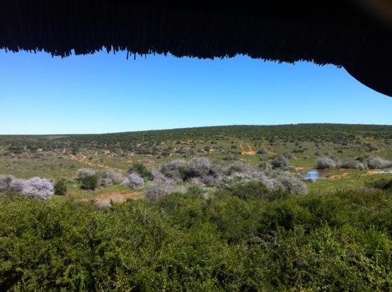 Addo Park Rest Camp: The view from Domkrag guest house