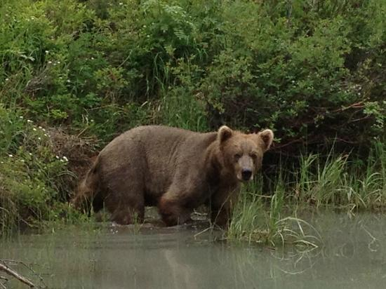 Bob's Cabin & Guide Service: A bear we saw on our Fly Out Trip